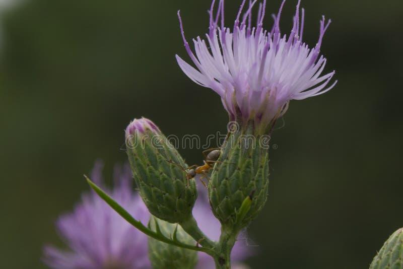 Fleur inconnue images stock
