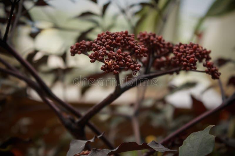 fleur inconnue d'arbre image stock