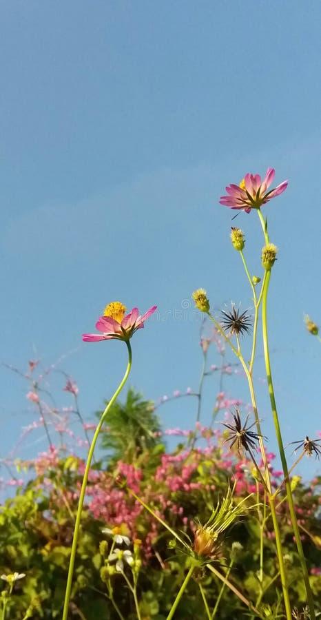 Fleur inconnue photo libre de droits