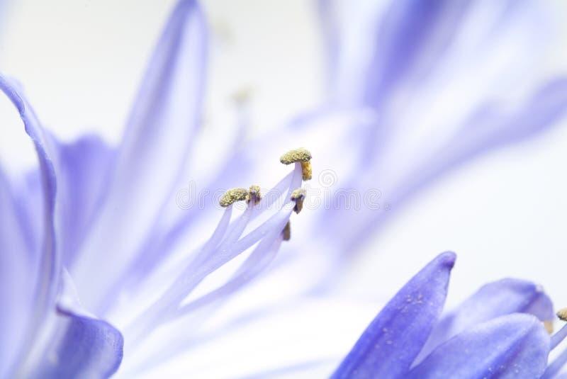 Fleur. instruction-macro photographie stock libre de droits