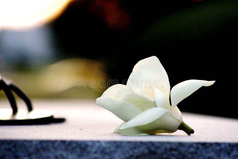 Fleur isolée de coucher du soleil photographie stock