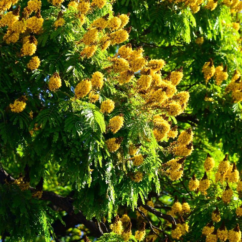 Fleur jaune photographie stock libre de droits