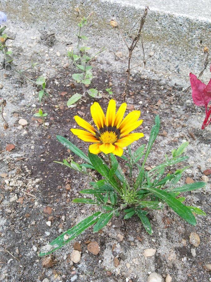 Fleur jaune assez images stock