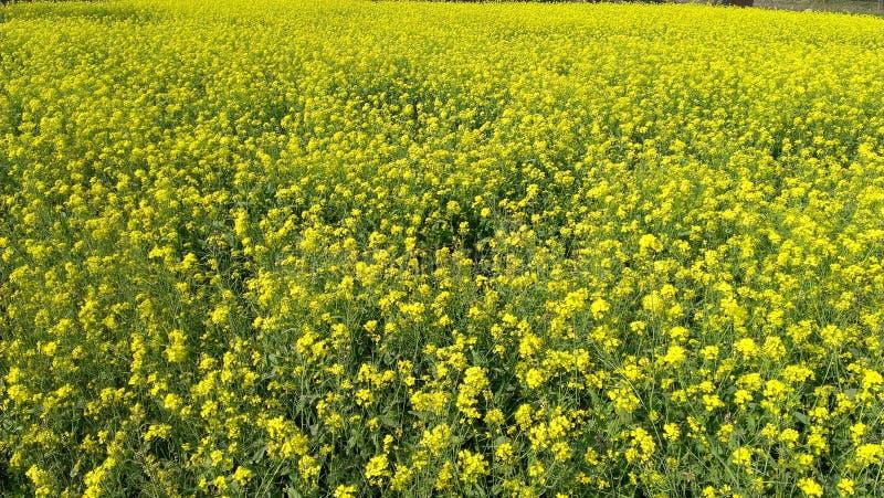 Fleur jaune avec la feuille rouge verte image stock