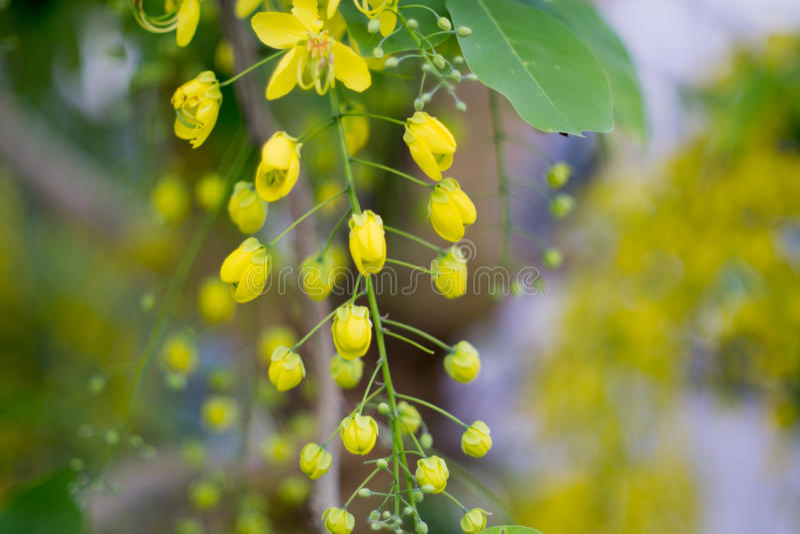 Fleur jaune avec le fond de tache floue photographie stock libre de droits