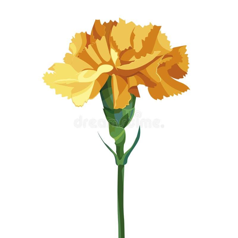 Fleur jaune d'oeillet D'isolement sur le blanc Collection pour le jour de mère, jour de victoire images stock