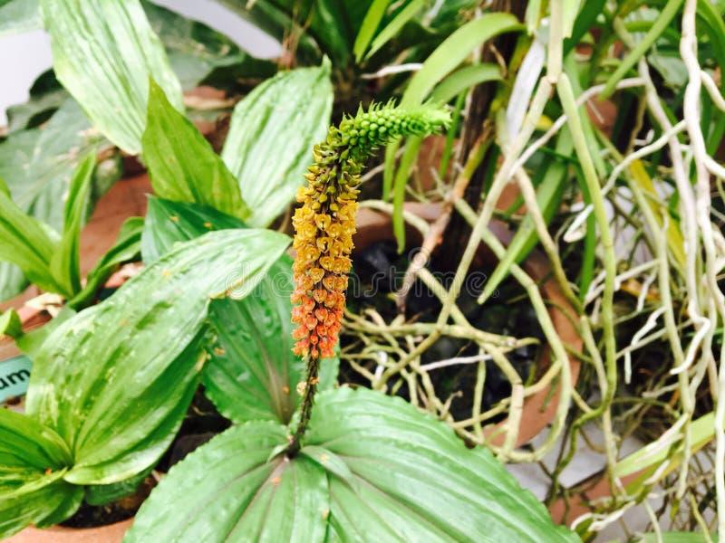 Fleur jaune d'orchidée images stock