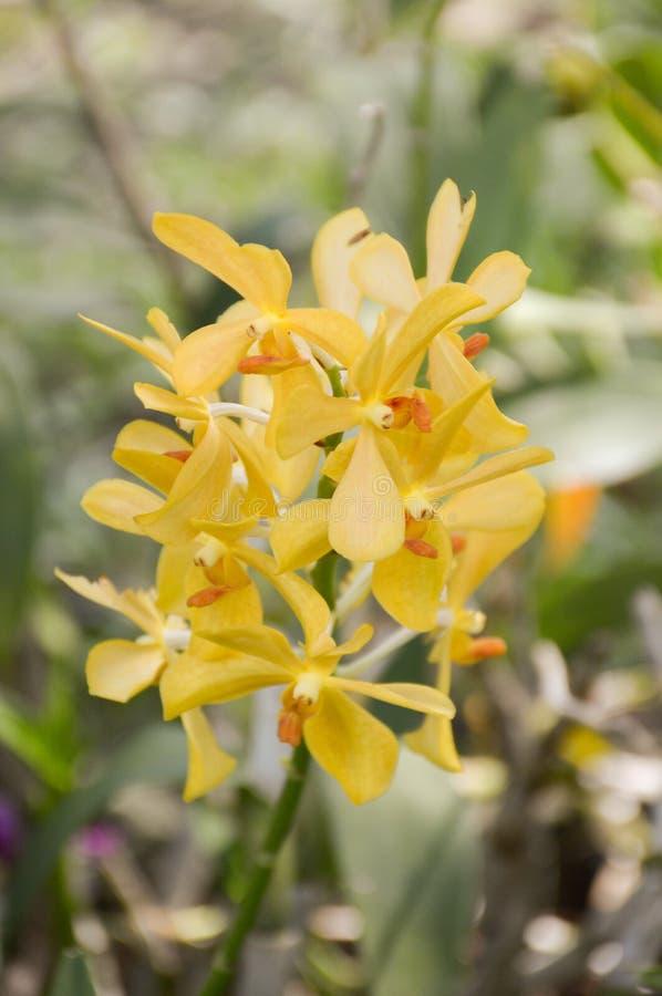 Fleur jaune d'orchidée photos libres de droits