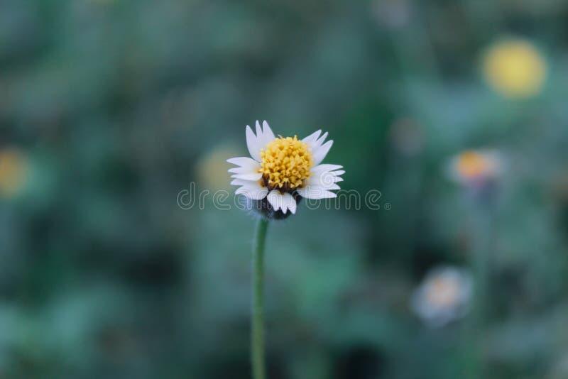 Fleur jaune dans le jardin photos stock