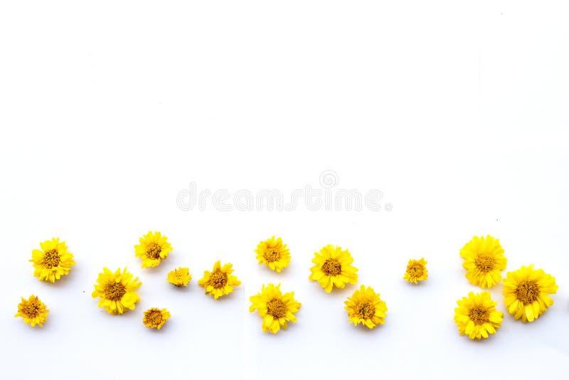 Fleur jaune de chrysanth?me photos stock