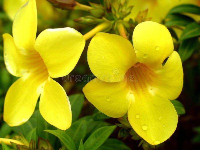 Fleur jaune de couleur photo stock
