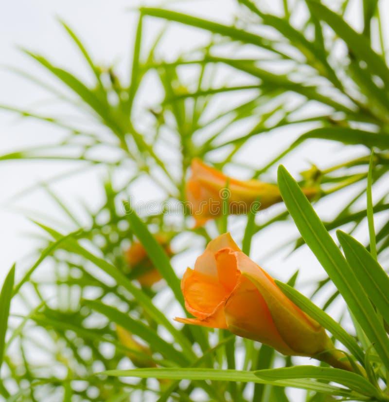 Fleur jaune et de lames images stock