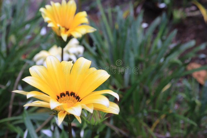 Fleur jaune fascinante avec le fond de forêt image stock