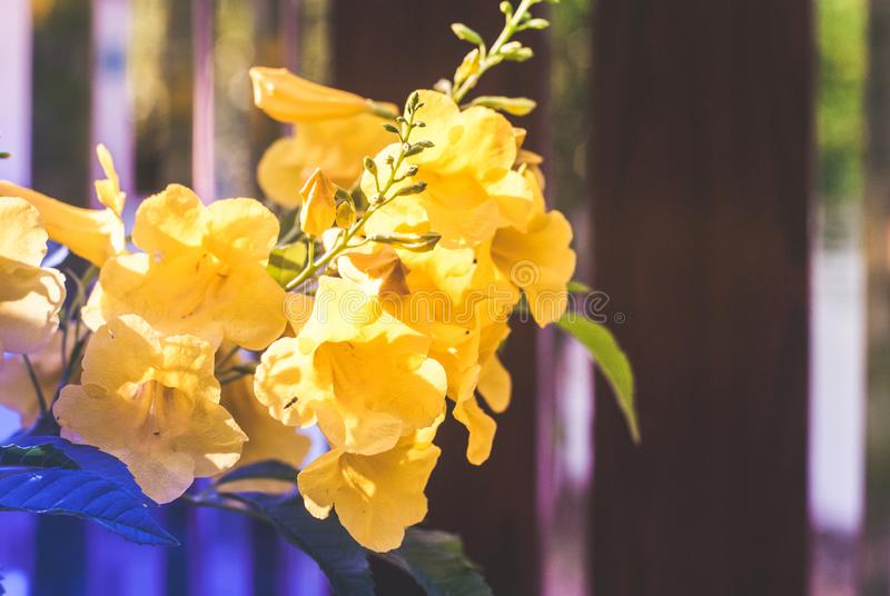 Fleur jaune fleurissant tellement allègrement en revanche filtre de couleur photo libre de droits