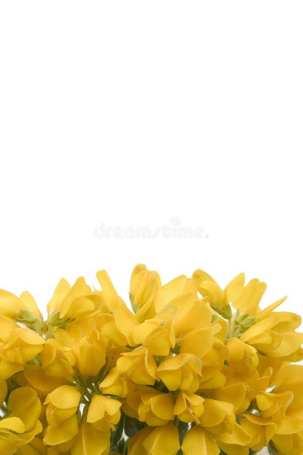 Fleur jaune footer1 photographie stock