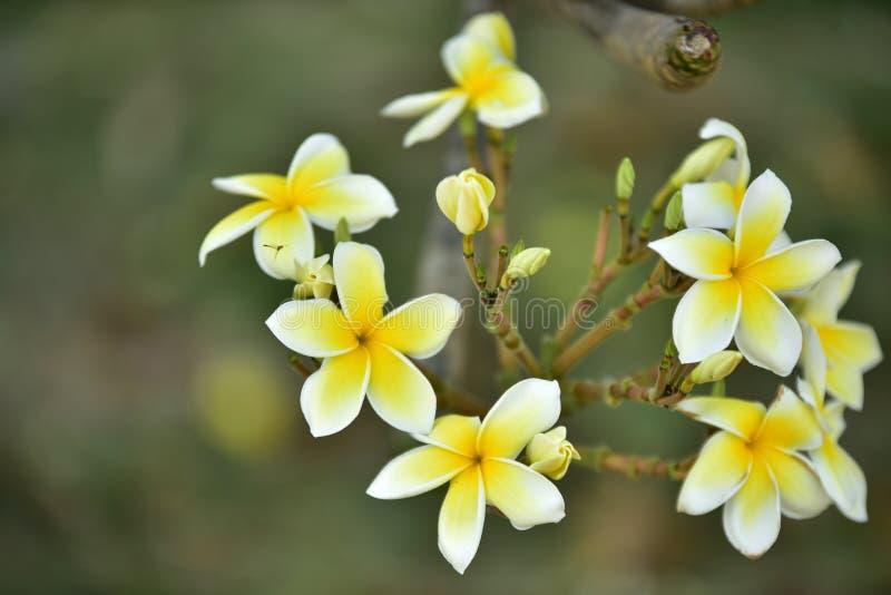 Fleur jaune ou fleur jaune image stock