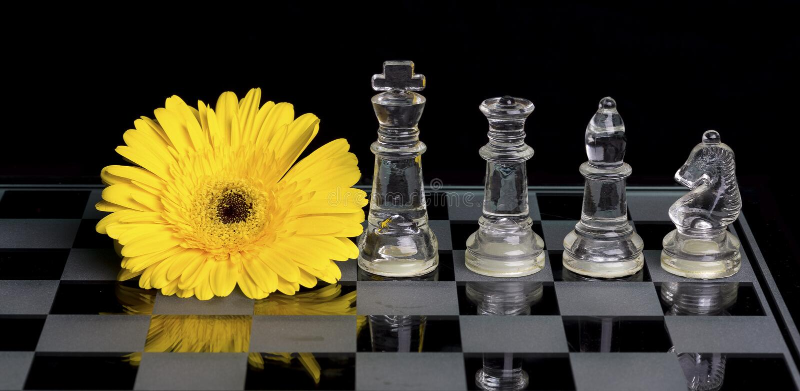Fleur jaune sur l'échiquier de verre noir et blanc avec le roi, qu photographie stock libre de droits