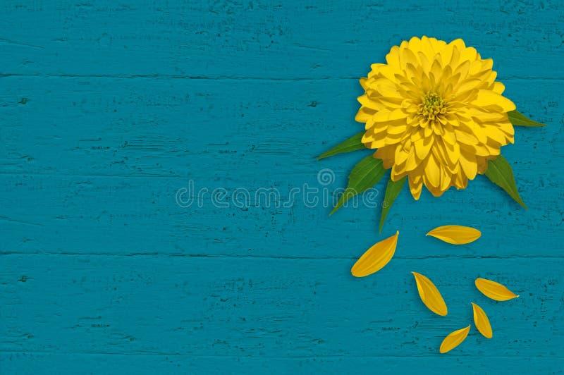 Download Fleur Jaune Sur Le Panneau En Bois De Turquoise Image stock - Image du turquoise, d0: 76090649
