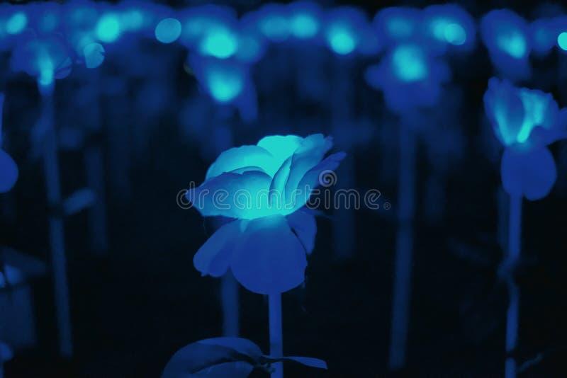Fleur légère bleue abstraite photos libres de droits