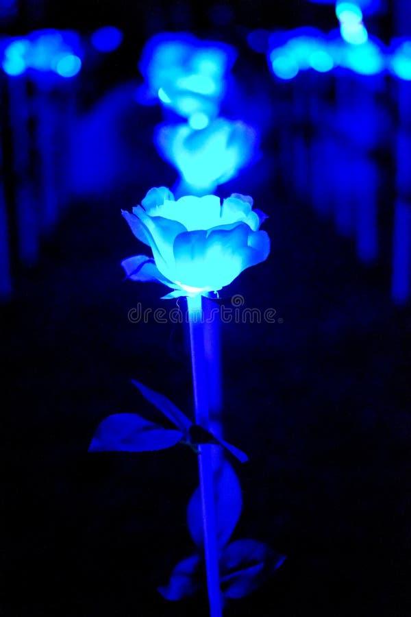 Fleur légère bleue abstraite image stock