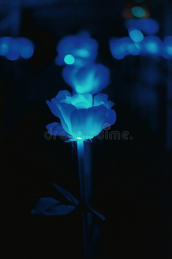 Fleur légère bleue abstraite photos stock