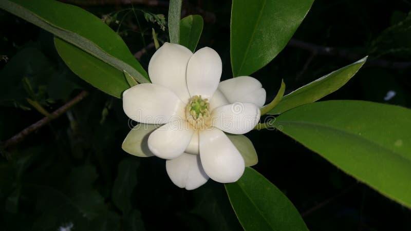 Fleur la nuit photos stock