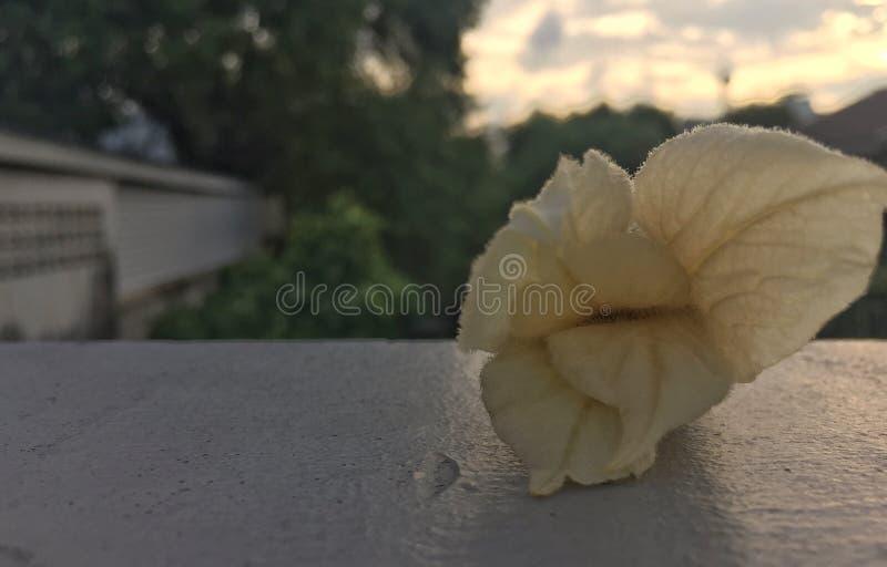 Fleur laissée tomber avec le coucher du soleil images stock