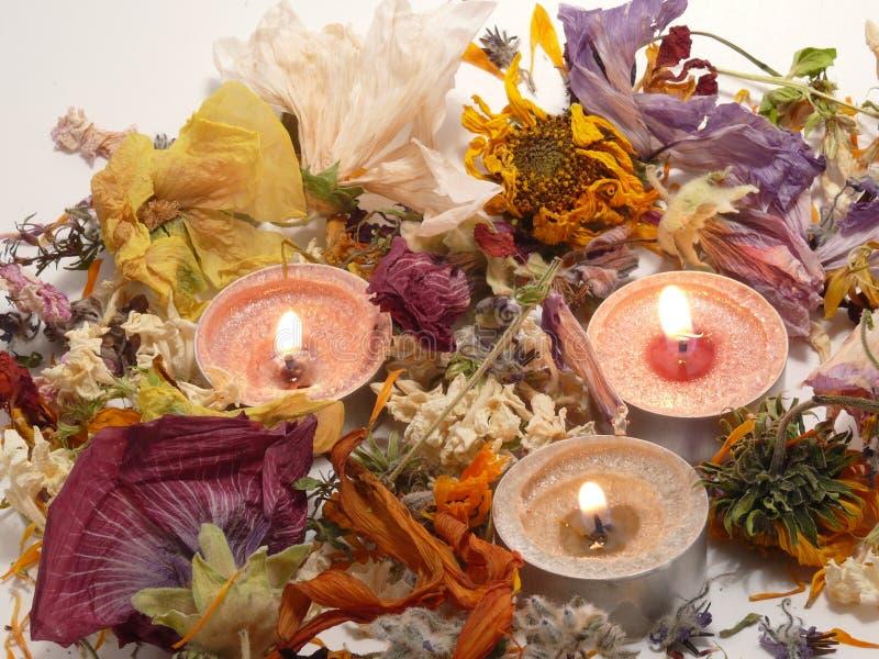 Fleur-lumières image libre de droits