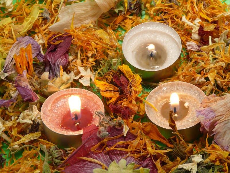 Fleur-lumières images stock