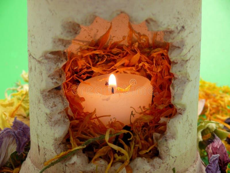 Fleur-lumières image stock