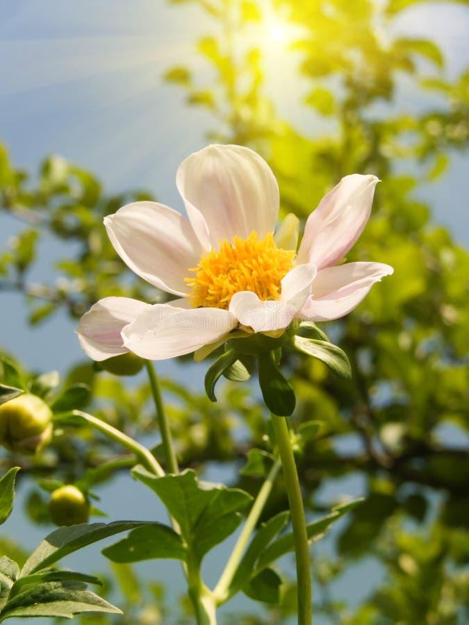 Fleur lumineuse dans un jardin image stock