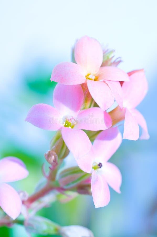 Fleur. macro profondeur de zone image stock
