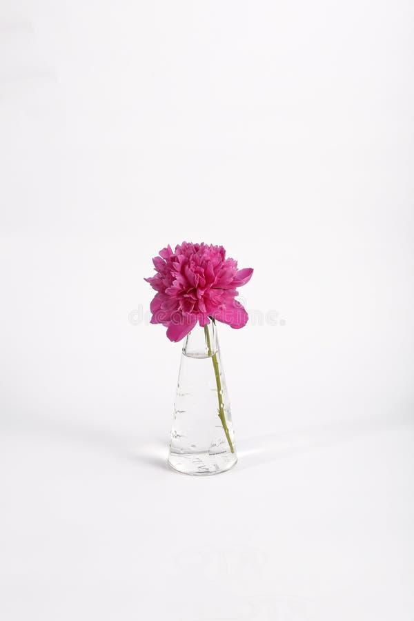 Fleur mauve dans un pot photographie stock libre de droits
