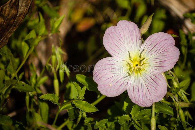 Fleur minuscule image stock
