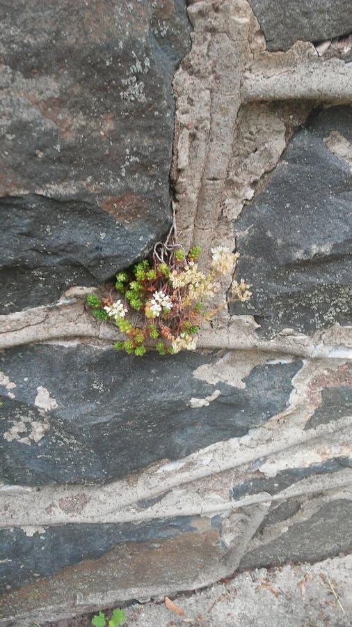 Fleur minuscule images stock