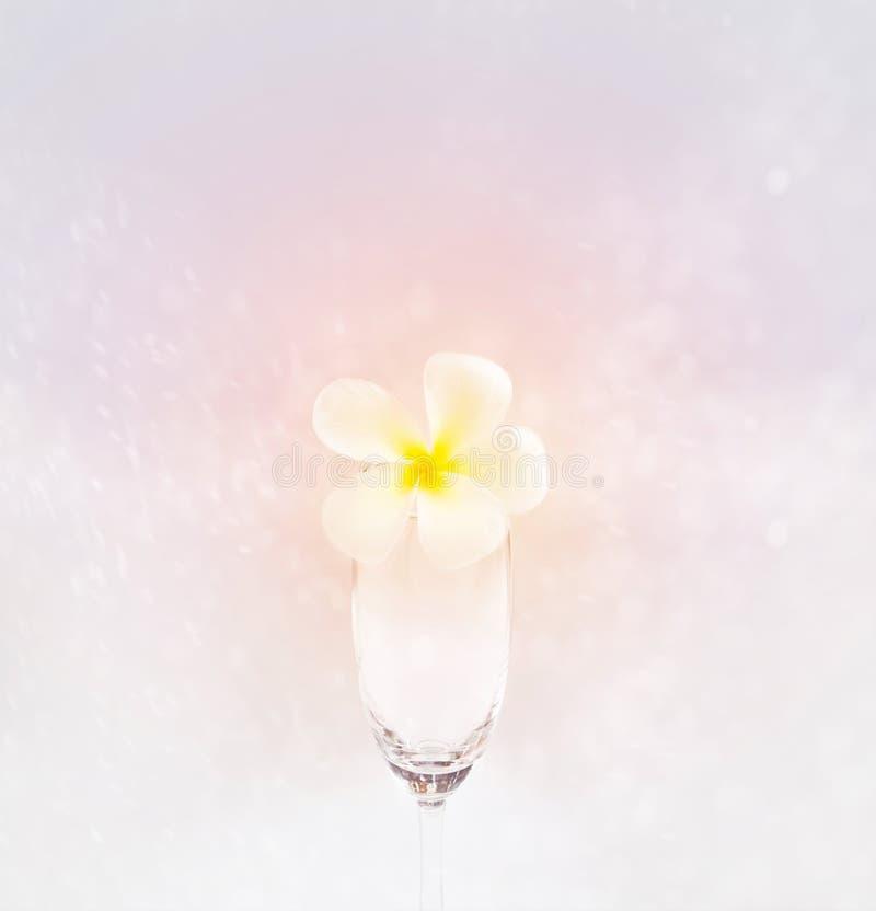 Fleur molle abstraite en verre sur le fond rose doux, foyer mou photo libre de droits