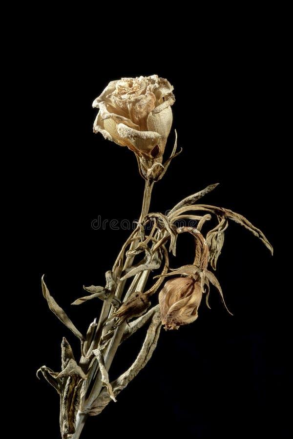 Fleur mourante image libre de droits