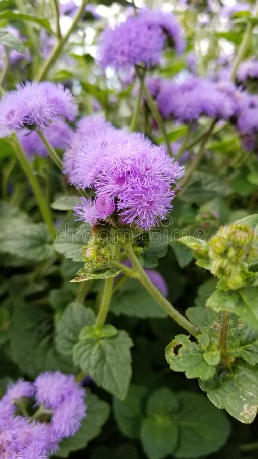 Fleur naturelle photos stock