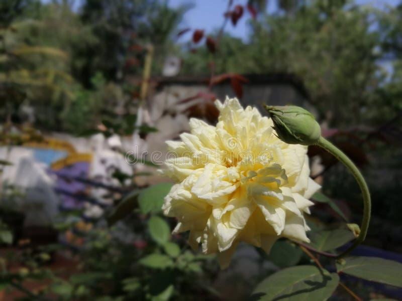 Fleur naturelle bleue image libre de droits