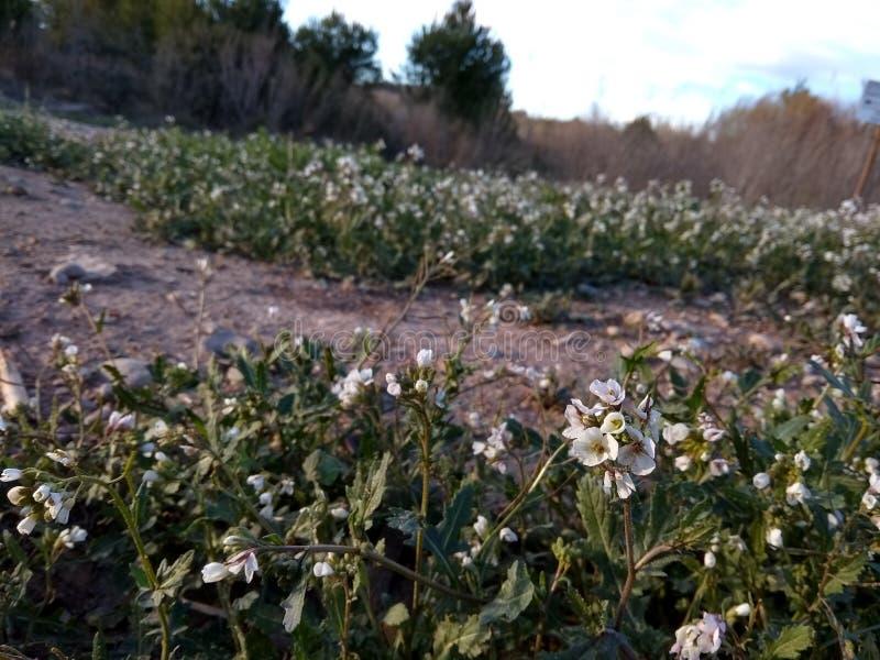 Fleur naturelle de rivière de paysage de Paisaje photographie stock libre de droits