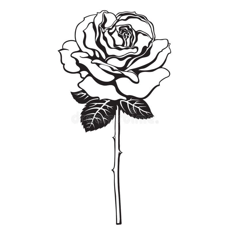 Fleur noire et blanche de rose avec les feuilles et la tige Vecteur tiré par la main illustration stock