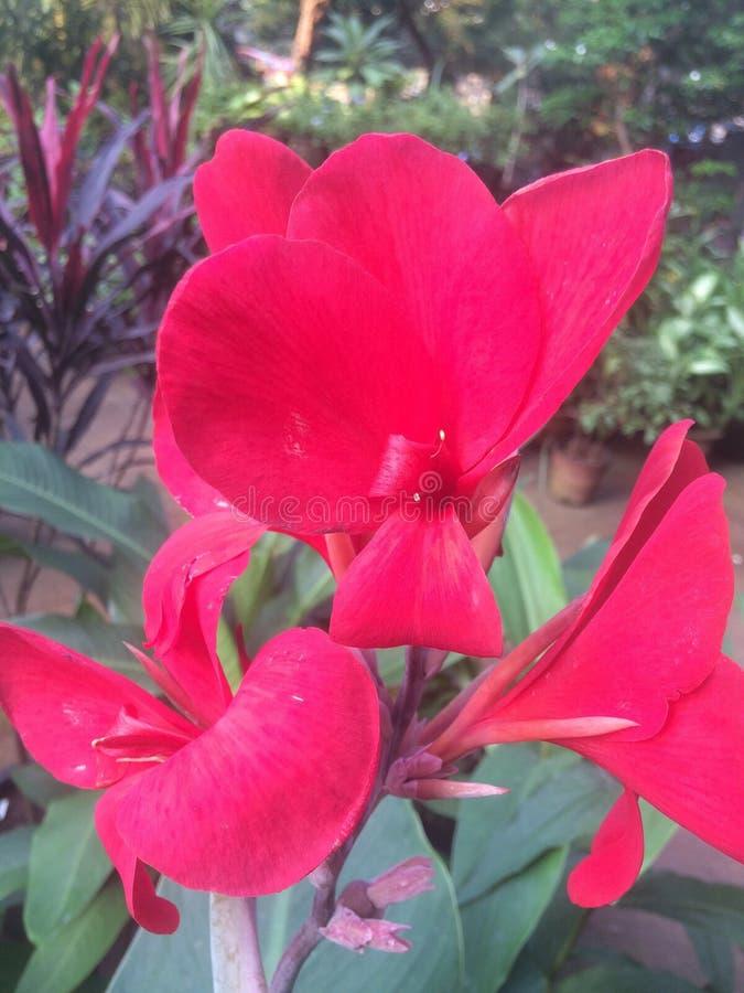 Fleur nouvelle photos libres de droits