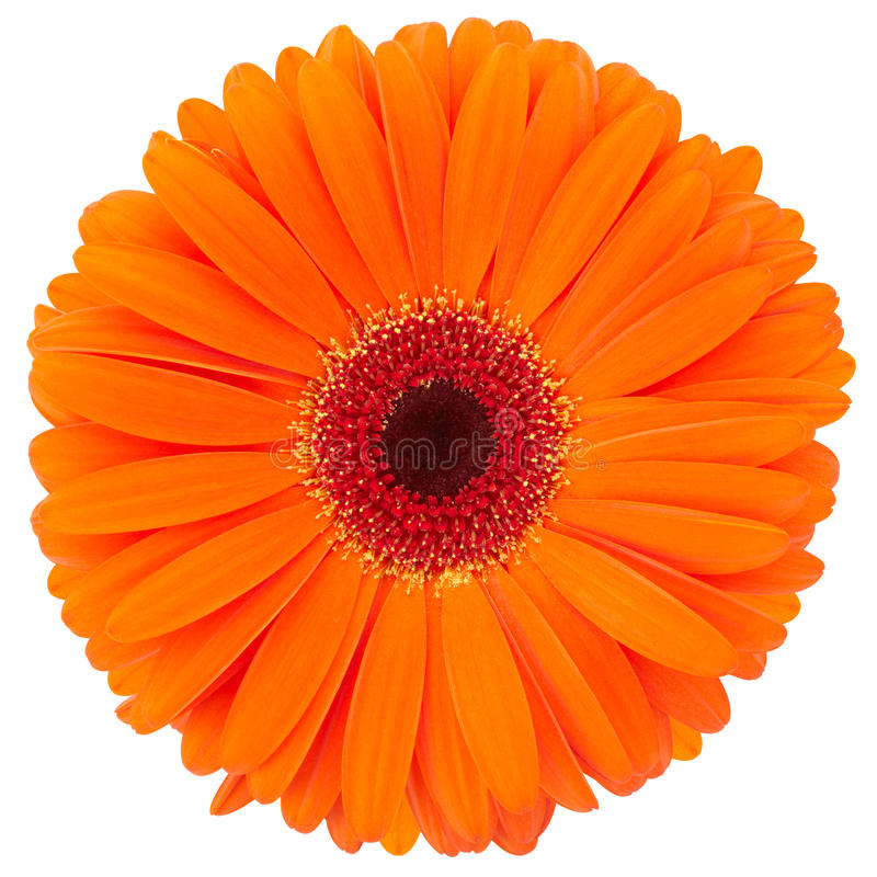 Fleur orange photos stock