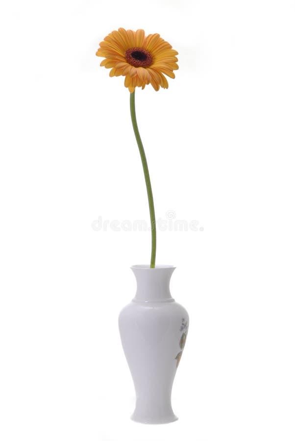 Fleur orange dans le vase photographie stock libre de droits