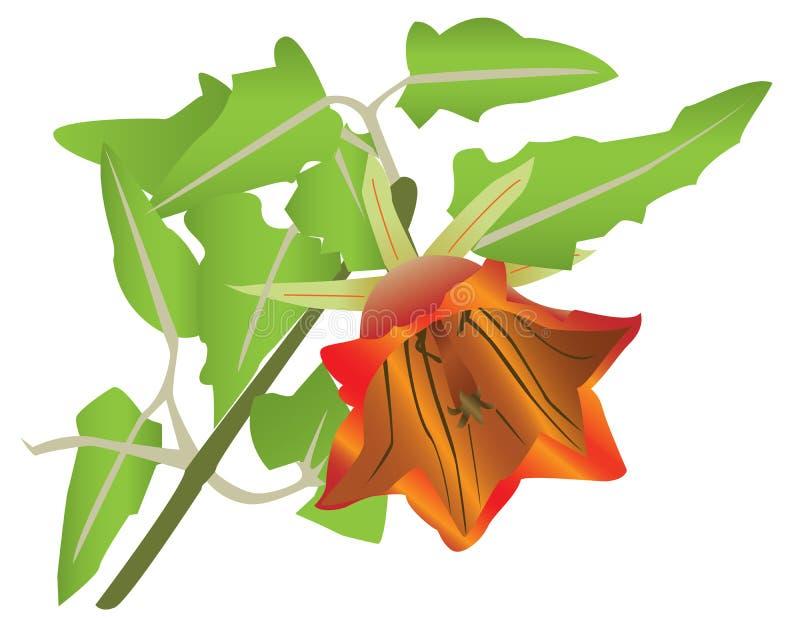 Fleur orange de floraison illustration libre de droits
