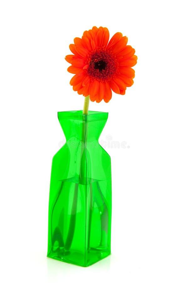 Fleur orange de Gerber image libre de droits