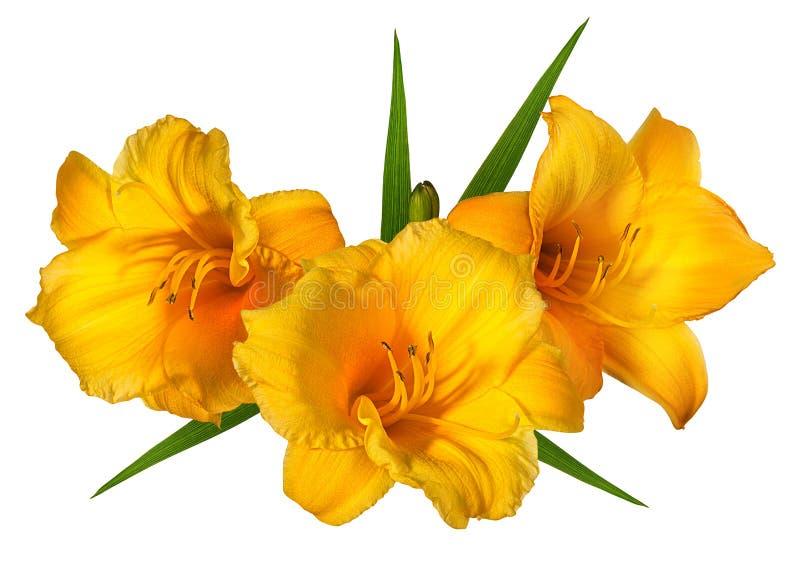 Fleur orange de Lilly sur le blanc photographie stock