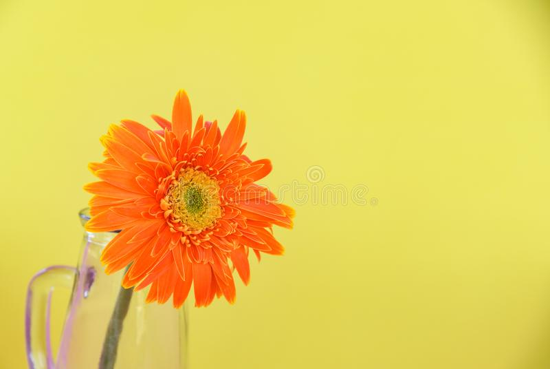 Fleur orange de marguerite de gerbera en composition en verre en pot sur le fond jaune beau image stock