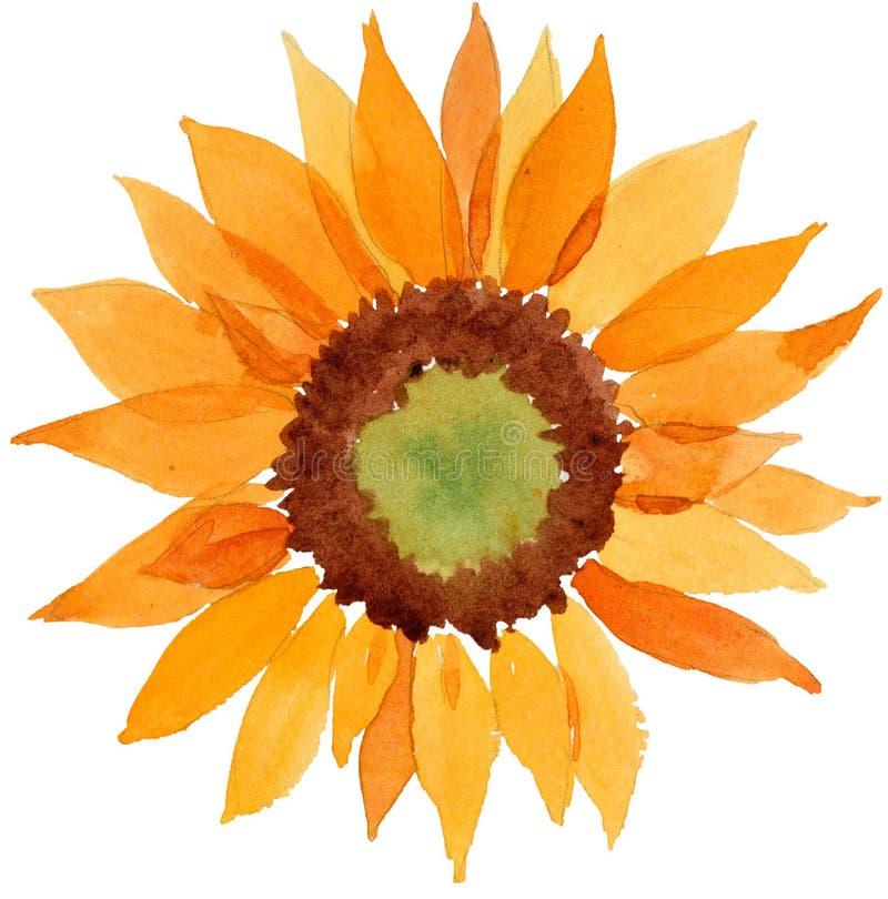 Fleur orange de tournesol d'aquarelle Fleur botanique florale Élément d'isolement d'illustration illustration libre de droits