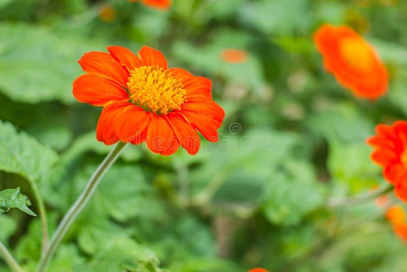 Download Fleur orange en nature image stock. Image du flore, outdoors - 45368147